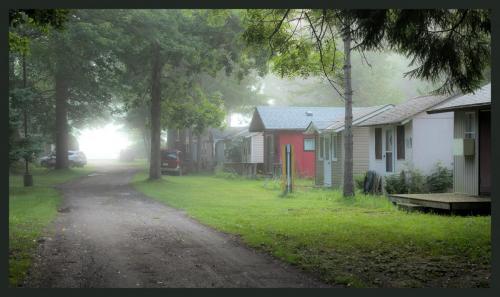 Misty-morning (1) (1)